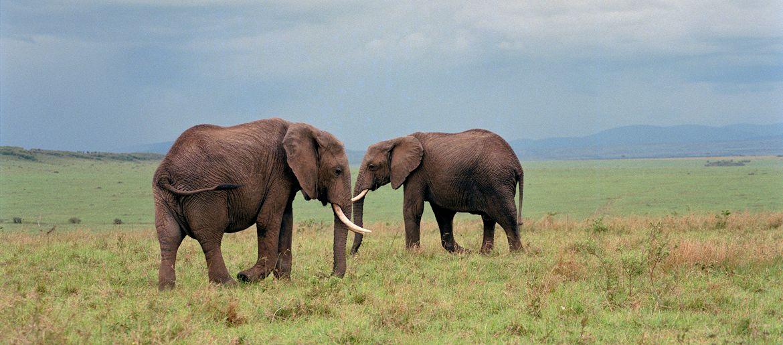 Africa Safari Portrait Photographer - Gail Nogle Photography