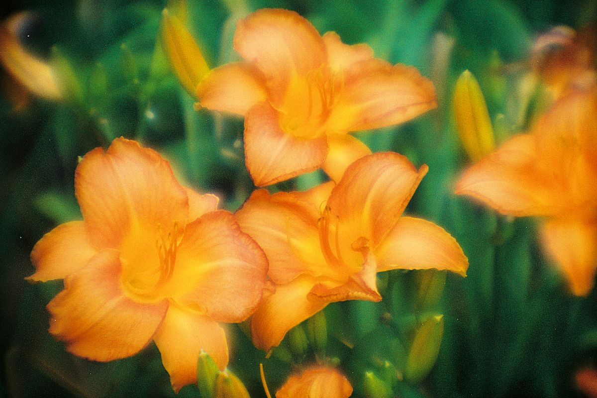 Floral Photography by Gail Nogle Photography