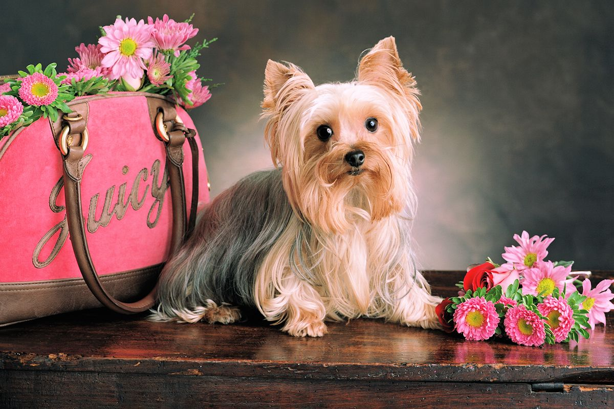 Pet Portrait Photographer - Gail Nogle Photography