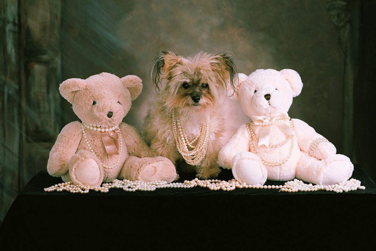 Pet Portrait Photographer - Gail Nogle Photography